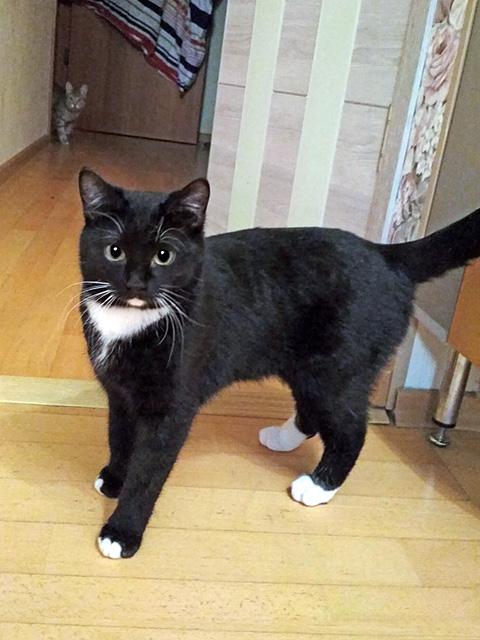 Черная жемчужина Цыганочка, роскошная домашняя кошечка в добрые руки
